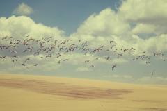 Photo_Landscape03