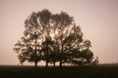 Photo_Landscape12
