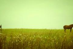 Photo_Landscape21