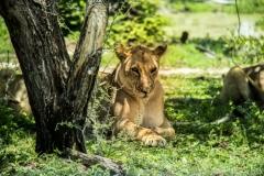 Photo_Wildlife07