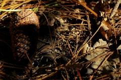 Photo_Wildlife26